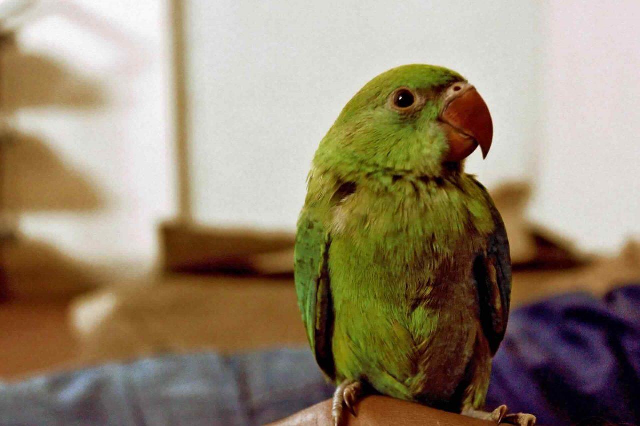 PETS-bird2-1-1280x853.jpg