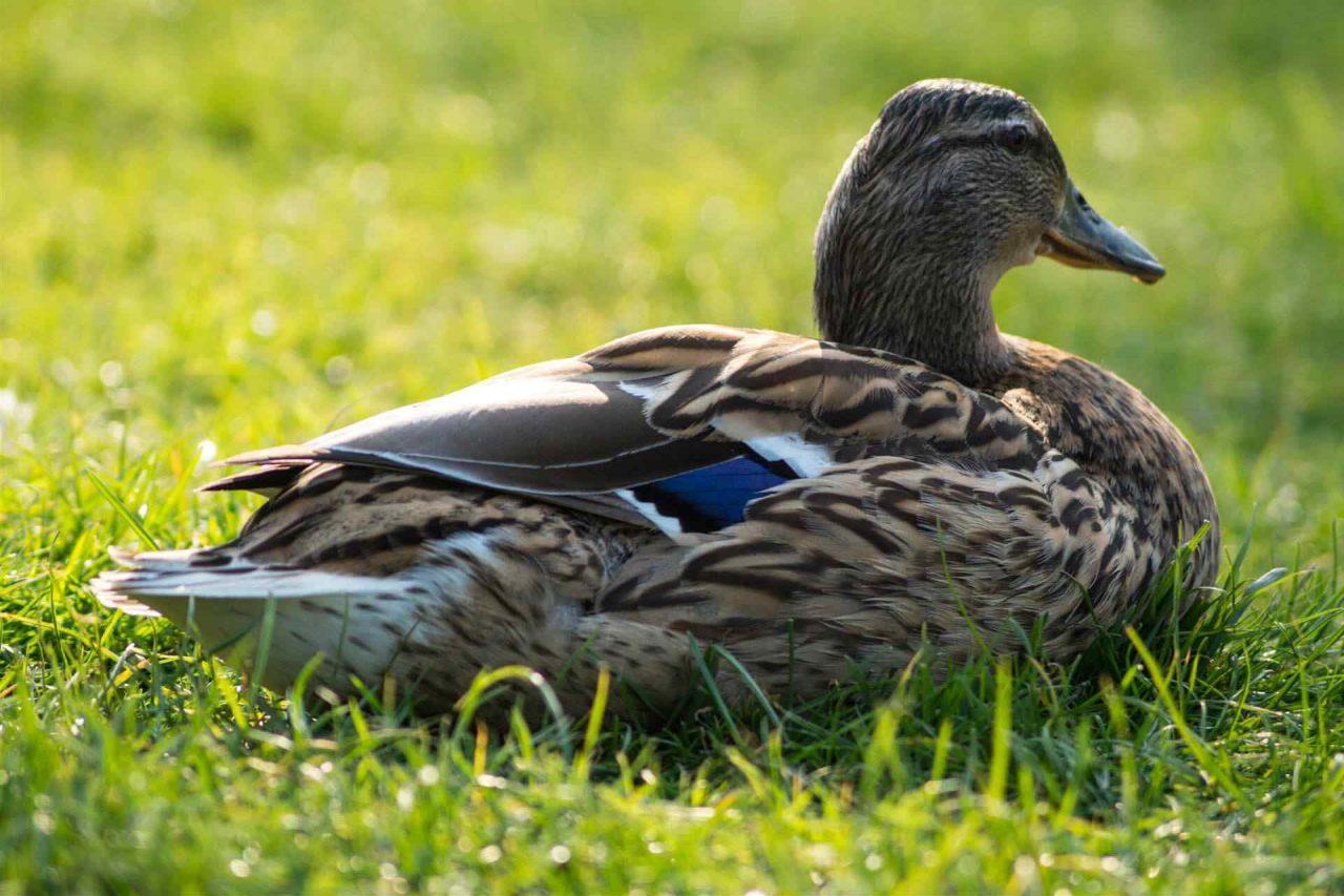 PETS-bird4-1-1280x853.jpg