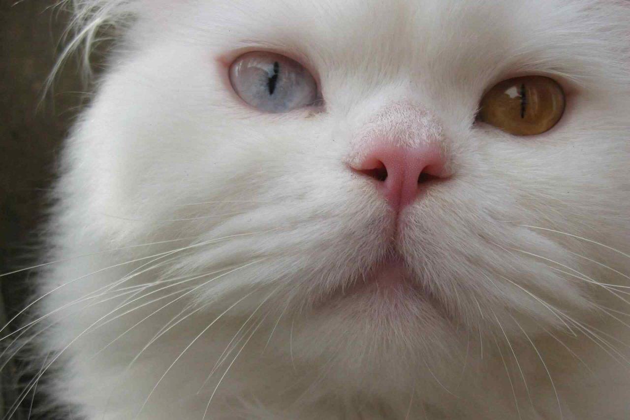 PETS-cats1-1-1280x853.jpg