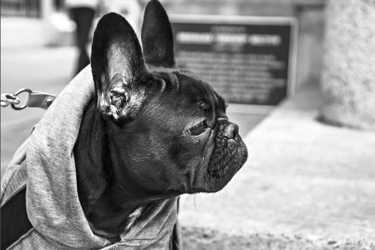 PETS-dog2-1-1280x853.jpg