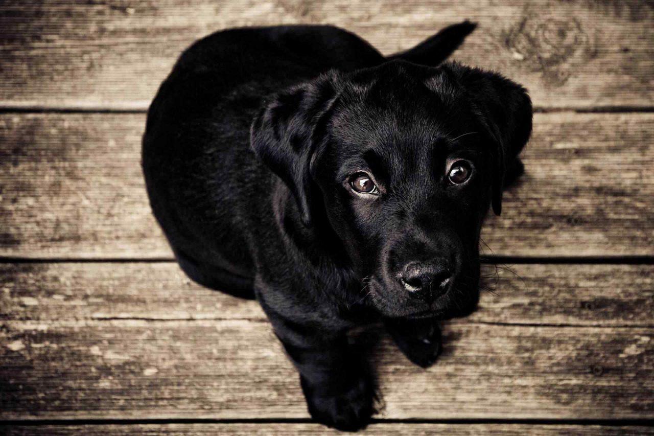 PETS-dog4-1-1280x853.jpg