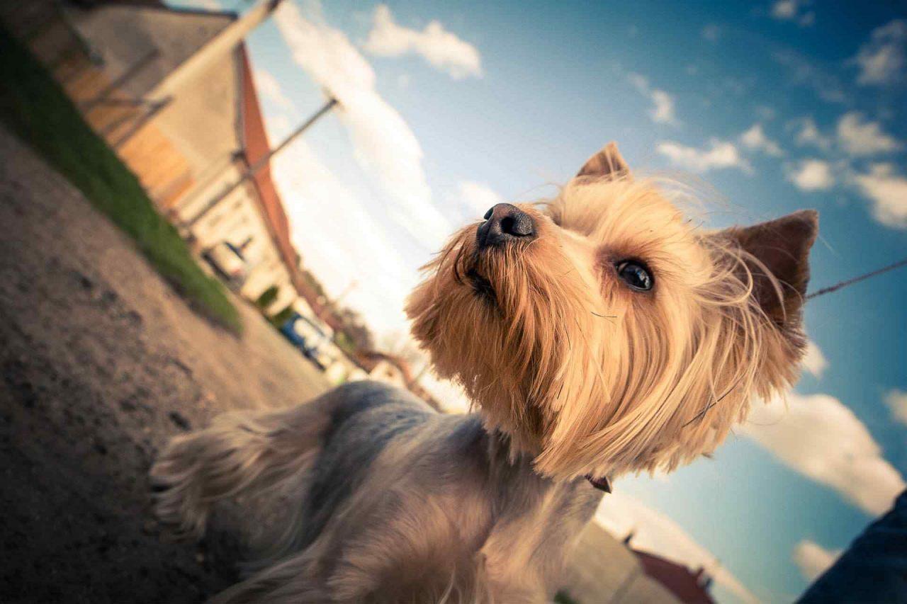 PETS-dog5-1-1280x853.jpg